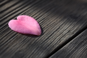 Heart shaped flower petal