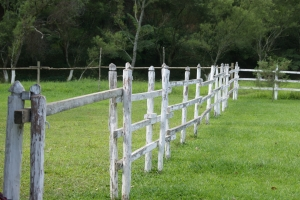 white fence -- grass is always greener on the other side