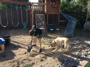 Boy and dog dig up weeds